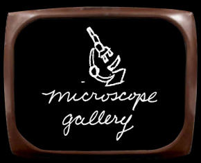 Microscope Gallery